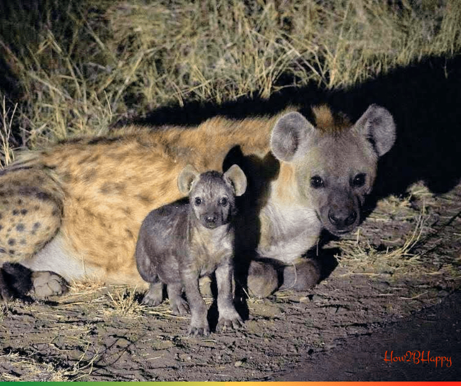 Hyena mother and cub symbolizing unjustified prejudices.