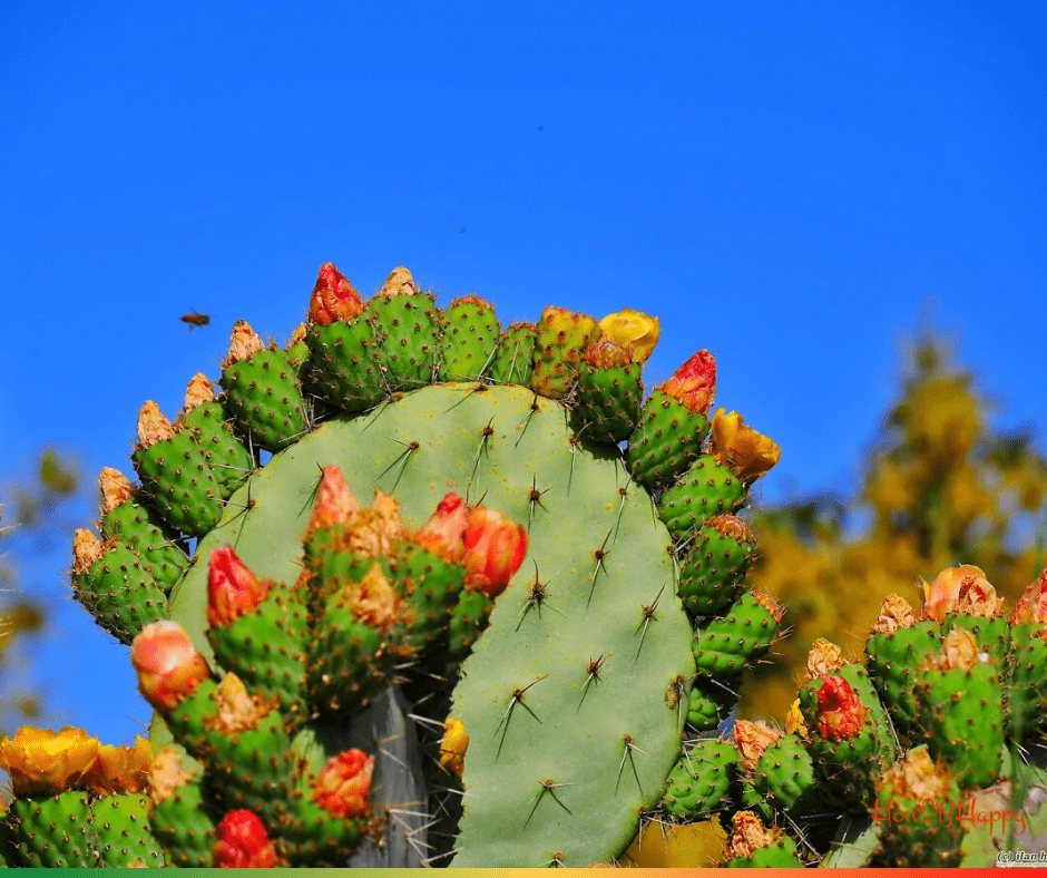cactus flowers symbolizing world change from thorny to good.