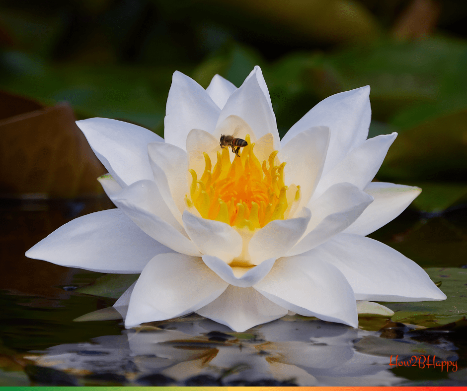 Lotus flower with a be symbolizing the cycle of the year.