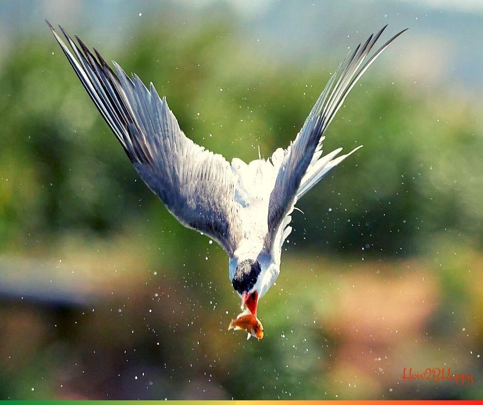 seagull falling following gold fish symbolizing the fall of art