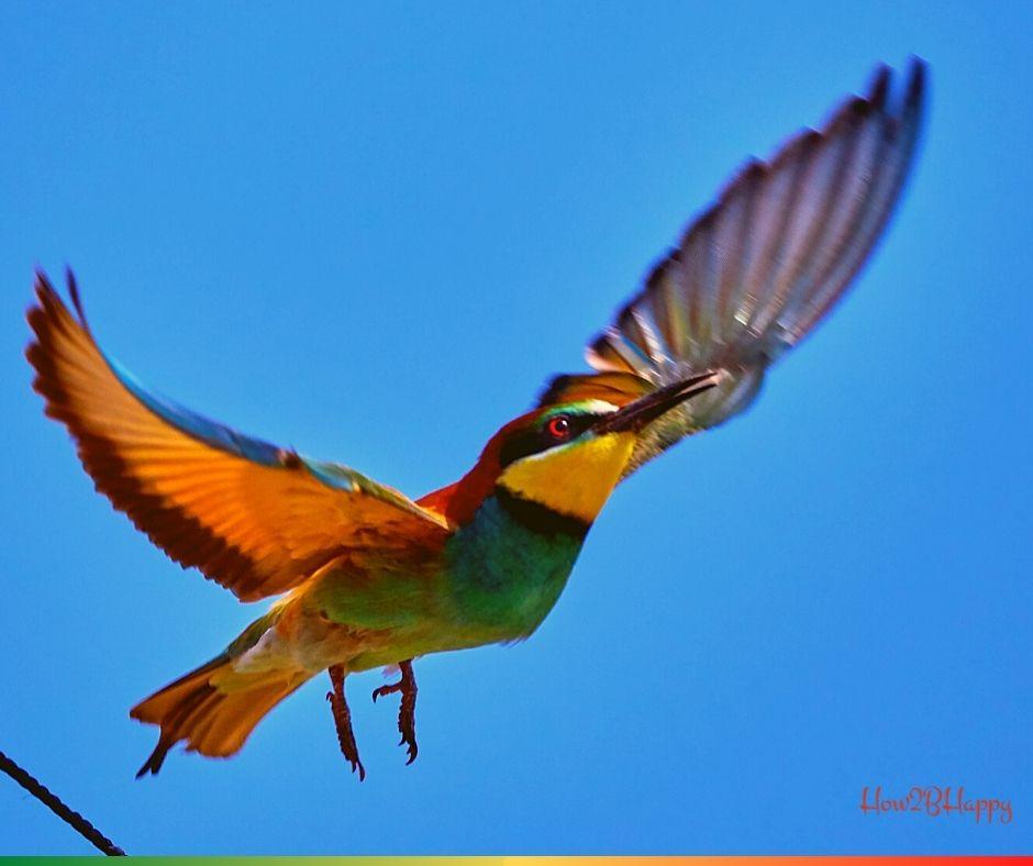 Flying bird symbolizing the free way